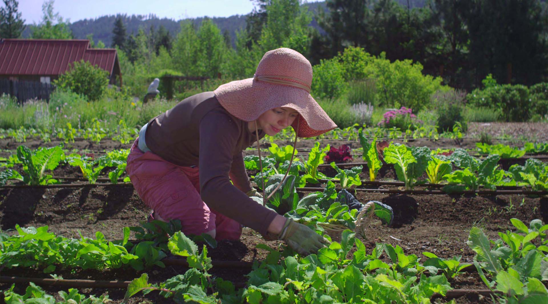 Go Green – Stay Safe: Keep your growing season 'fruitful' by sticking to these simple tips to avoid injuries!